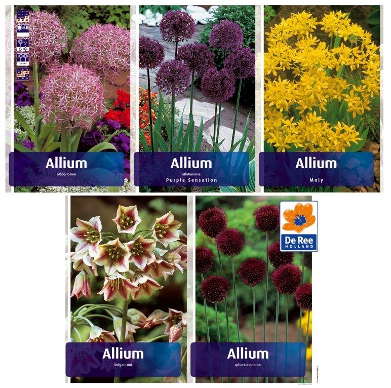 Луки декоративные ALL 01  ALLIUM (500шт)